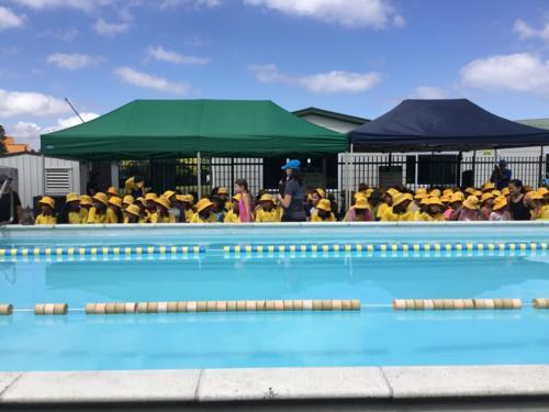 Swimming Sports (Seniors)